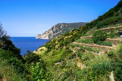 Trail overlooking vineyards and sea in the Cinque Terre Stock Photography