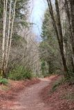 Trail through Pacific Northwest Royalty Free Stock Photography