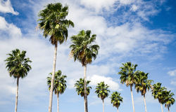 Trail of Palms Royalty Free Stock Image