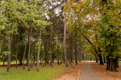 Trail in the park in autumn. Trail in the park surrounded by golden and green maple trees and pine trees in autumn Stock Images