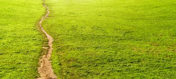 Trail on park with grass. And copy space stock photography