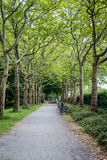 Trail in the park with green trees. In Berlin Stock Photos
