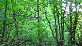 Trail in the park. Smooth and slow horisontal panorama cam shot. Clean and bright daytime in spring. stock footage