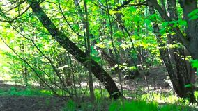 Trail in the park. Smooth and slow panorama cam shot. Clean and bright daytime in spring. Trail in the park. Smooth and slow panorama cam shot. Clean and bright stock footage