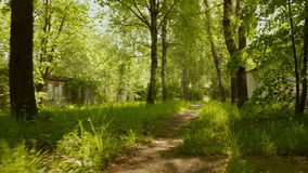 Trail in the park. Smooth and slow steady cam shot. Clean and bright daytime stock footage