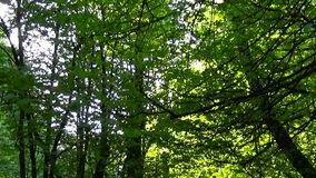 Trail in the park. Smooth and slow vertical panorama cam shot. Clean and bright daytime in spring. Trail in the park. Smooth and slow panorama cam shot. Clean stock footage