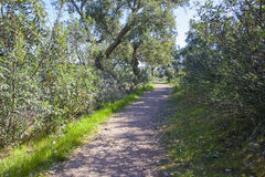 Trail pass along Cork Oaks forest at Cornalvo Natural Park, Spai Royalty Free Stock Photos