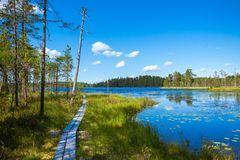 Trail past the lake. In the national park Royalty Free Stock Image