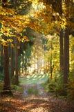 Trail path in coniferous deciduous forest park in autumn sun. Trail path in the coniferous deciduous forest park in autumn in the sun light stock image
