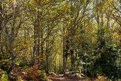 Trail, path in the forest. Calm day stock photography