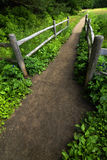 Trail or Pathway in Lush Green Forest Royalty Free Stock Photography
