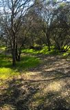 Path through sleeping trees. Trail at Quarry Park, Rocklin CA Stock Images