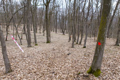 Trail race marking. In a a fosret Stock Photography