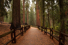 Trail in rain Stock Photography