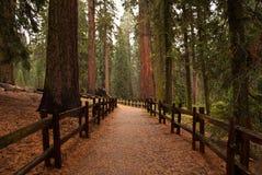 Trail in rain Stock Photography
