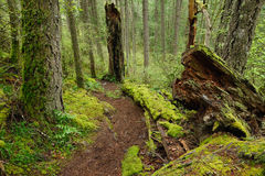 Trail in rain forest. Hiking trail in rain forest at witty's lagoon regional park, vancouver island, bc, canada Royalty Free Stock Photography