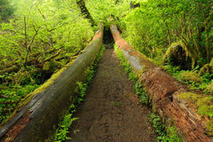 Trail in rain forest Royalty Free Stock Photo