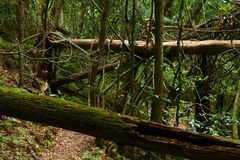 Trail in rain forest. View of a trail in extricate rain forest (Australia Stock Photography