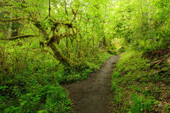 Trail in rain forest Stock Photo