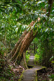Trail in the rain forest, Bako National Park royalty free stock photography