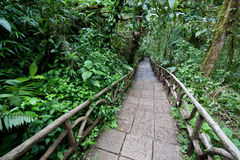 Trail through rainforest. Trail through a lowland tropical rainforest in Costa Rica at La Paz Waterfall Gardens Royalty Free Stock Photo