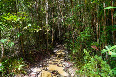 Trail in the rainforest at Bako National Park Royalty Free Stock Photography
