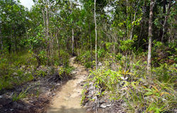 Trail in the rainforest at Bako National Park Stock Photo