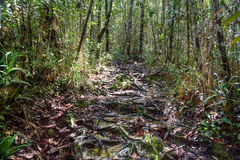 Trail in the rainforest at Bako National Park Stock Photos