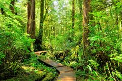 Trail through the rainforests of Pacific Rim National Park, Vancouver Island Stock Images