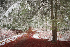 Trail of red leaves in a forest during winter Stock Photo