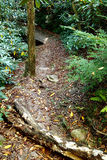 Trail in Rhododendron Forest Royalty Free Stock Images