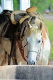 Trail Ride Horse awaiting a rider Royalty Free Stock Photography