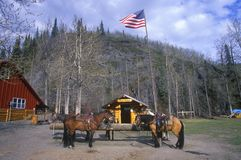 Trail ride tourist attraction, Alaska Stock Image