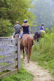 Trail Riders. The back view of two young teens and their dad trail riding on horses on an overcast summer day Royalty Free Stock Photo