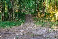 Trail road in bamboo forest Stock Photo