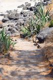 A Trail through Rocks and Plants in Natural Surroundings Royalty Free Stock Photo