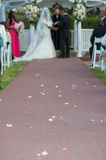 Trail of rose petals Royalty Free Stock Image
