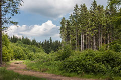 On the trail. Rudawy Landscape Park. The road to the summit of the Great Kopa. Country. Poland, Region: Lower Silesia Stock Photos