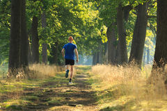 Trail run lane. Man trail running in a lane of tree's on a sunny morning royalty free stock image