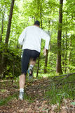 Trail runner. Running at a fast pace through the woods Royalty Free Stock Photography