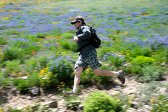 Trail runner. A runner makes his way across a trail and hillside of wildflowers photographed using motion panning Royalty Free Stock Image