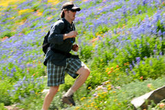 Trail running. A runner makes his way across a trail and hillside of wildflowers photographed using motion panning Royalty Free Stock Image