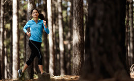 Trail running forest Royalty Free Stock Image
