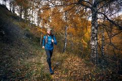 Trail running in the forest royalty free stock images