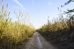 Trail in a Rural area. Raw trail / track in a rural deserted area Royalty Free Stock Image