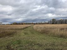 Trail through Rye Fields. Off road trail through a rye field cloudy stock image