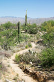 Trail in Saguaro National Park, Arizona Stock Photos