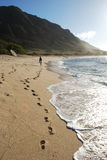 Trail in the sand. Footprints left by girl on the beach in Oahu, Hawaii Royalty Free Stock Photography