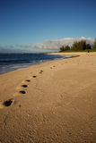 Trail in the sand. Footprints left by girl on the beach in Oahu, Hawaii Stock Photography