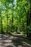 Trail in Shale Hollow Preserve in Ohio Stock Images